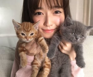 cats, japan, and japanese image