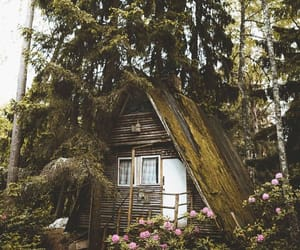cabin, forest, and green image