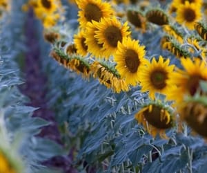 belleza, campo, and naturaleza image