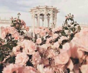 aesthetics, europe, and flowers image