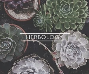 herbology, hogwarts classes, and core classes image