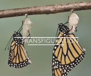 transfiguration, hogwarts classes, and hogwarts subjects image