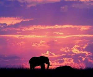elephant, sky, and animal image