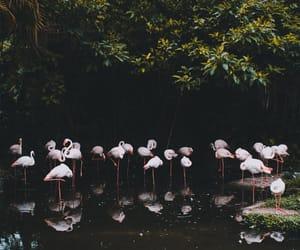 animals, unsplash, and flamingos image