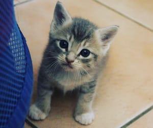 adorable, gris, and mignon image