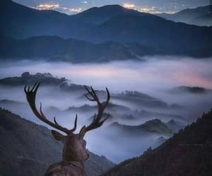 mountains, animals, and landscape image
