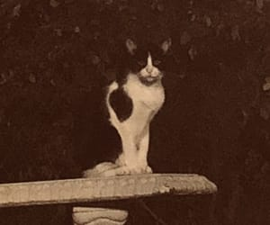 cats, chillin, and vintage image