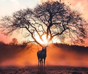 tree, animal, and nature image