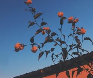 aesthetic, flowers, and random image