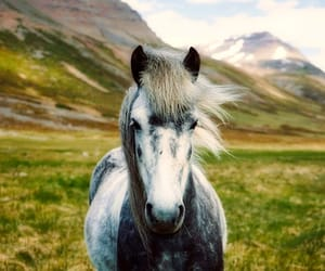 animals, horse, and beautiful image
