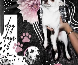 black and pink, pets, and pink image