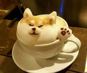coffee, dog, and drink image
