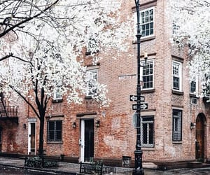 photography, blossom, and street image