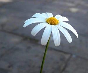 flores and margarita image