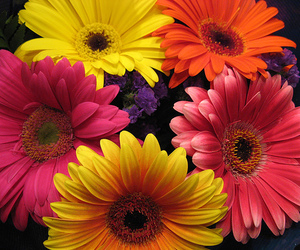 bouquet, daisies, and vibrant image
