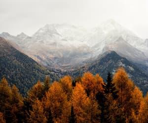 autumn, nature, and fog image
