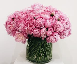 flowers, pink, and interior image