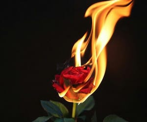 aesthetic, fire, and rose image