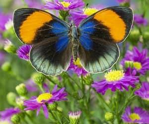 Animales, mariposa, and naturaleza image