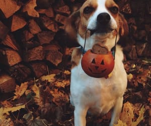 autumn, dog, and Halloween image