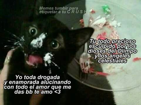 110 Images About Yo Toda Pendeja On We Heart It See More