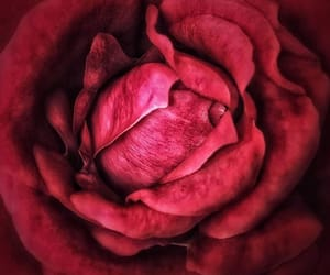 beauty, gentleness, and red image