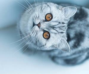cat, cute, and 😍 image