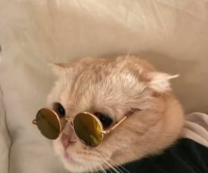cat, glasses, and kitty image