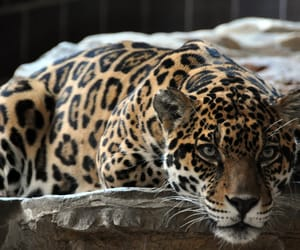 leopard, photography, and animal image
