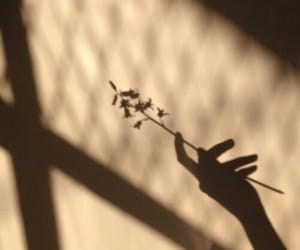 flowers, aesthetic, and shadow image