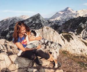 animal, dog, and mountains image