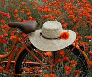 flowers, bicycle, and red image