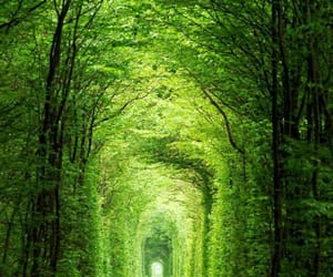 nature, ukraine, and tunnel of love image