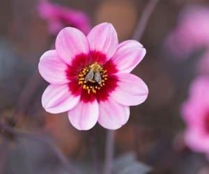 felicidad, flower, and flor image