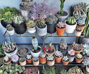 cactus, plants, and garden image