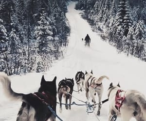 snow, winter, and wolves image