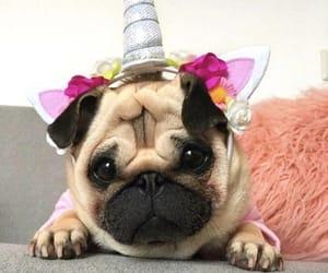 dog, pug, and unicorn image