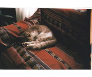 cat, simply, and vintage image