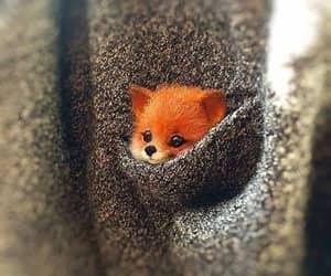 cute, fox, and animal image