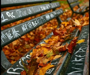 autumn, banc, and bench image