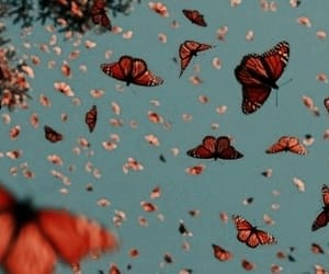 butterflies, headers, and psd image