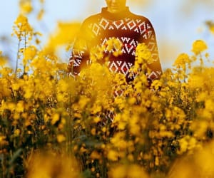 flowers, yellow, and Harry Styles image
