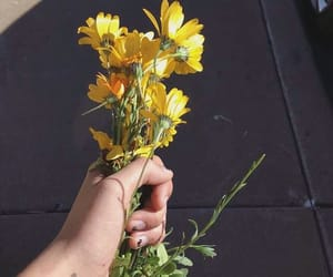 flowers, tumblr, and yellows image