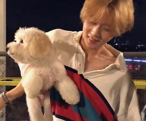 triple h and edawn image