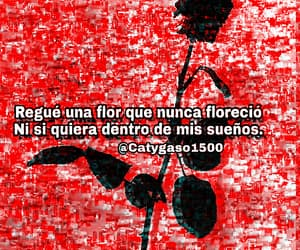 aesthetic, frases, and red image
