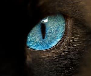 eyes cat image