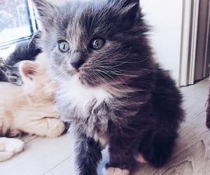 big, cat, and eyes image
