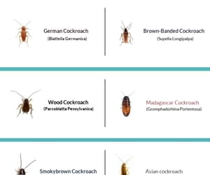 types of roach image