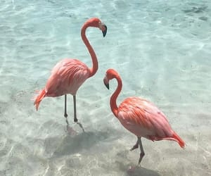 animals and birds image