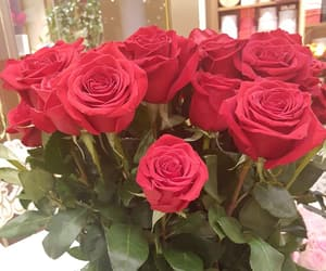 beautiful, red, and red rose image